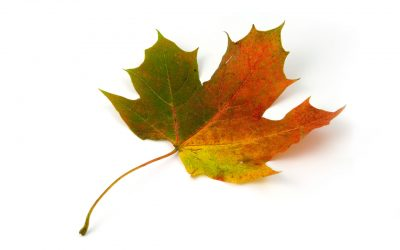 PMFlashBlog2 Project Management Around the World / Ottawa, Ontario, Canada, North America