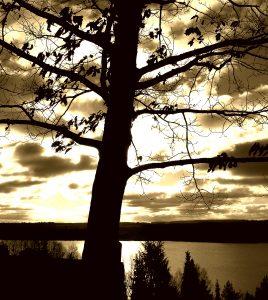 Tree over sun